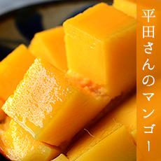 宜野座村平田さんのマンゴー